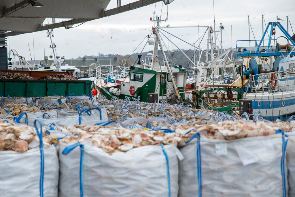 Bags of scallops at commercial fishing dock.